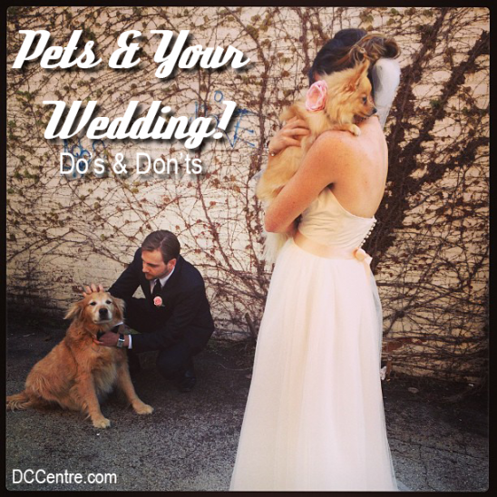Things to Consider When Having Pets at Your Wedding